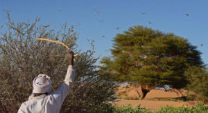 Read more about the article Fight against desert locust swarms goes on in East Africa despite coronavirus crisis measures
