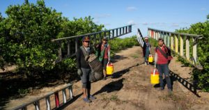 Read more about the article Heat Wave Hits Florida – and Its Unprotected Farmworkers