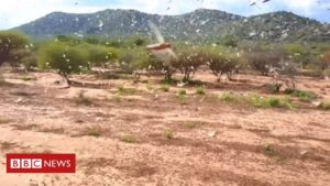 Read more about the article Locusts destroying food supplies in the Horn of Africa
