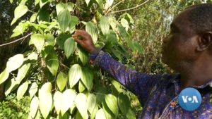 Read more about the article Ghana Businessman Promotes Benefits of Maintaining Forests   Voice of America