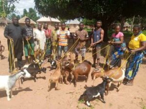 Read more about the article Goats, Donkeys, Wheelbarrows – Ridiculous Items In Nigerian Politicians' Empowerment List Prompt Backlash