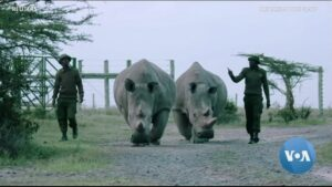 Read more about the article On the Brink of Extinction, the Northern White Rhino Now Has a Chance at Survival