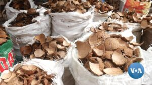 Read more about the article NigerianCompaniesUseCharcoalSubstitutesto Reduce Deforestation | Voice of America