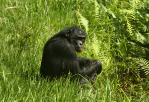 Read more about the article UNESCO Removes DR Congo Park From Endangered List | Voice of America