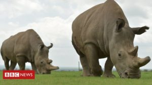 Read more about the article The audacious plan that could save a species