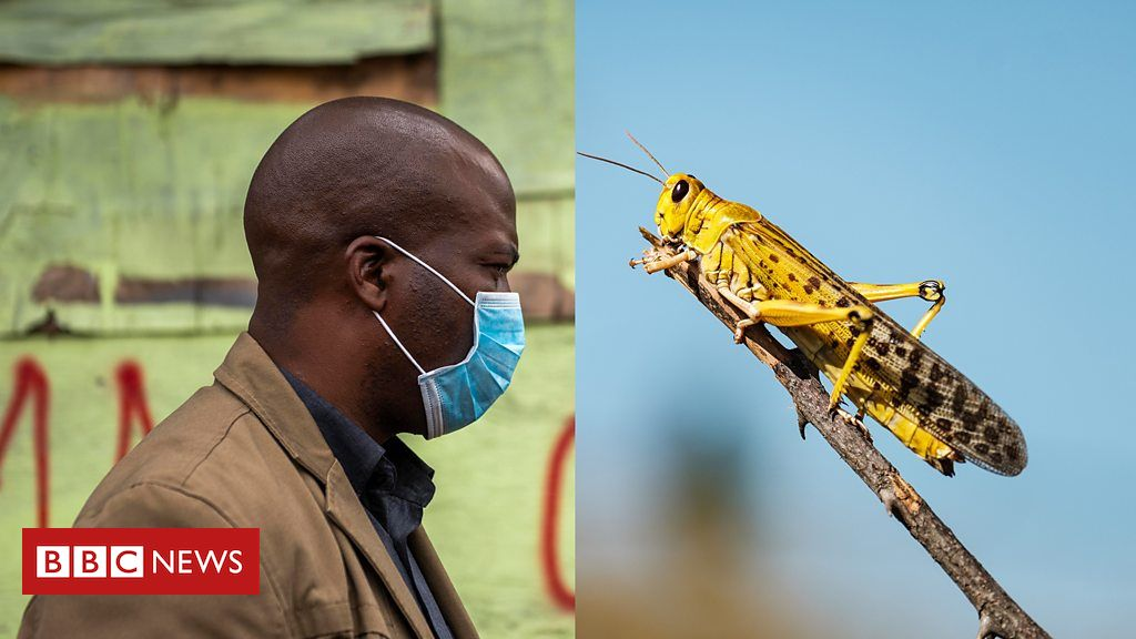 Read more about the article Coronavirus in Africa: Locusts add to food security concerns