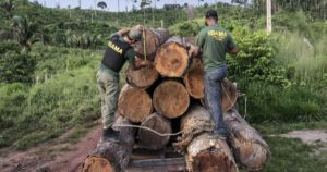 Read more about the article Brazil: Amazon Penalties Suspended Since October