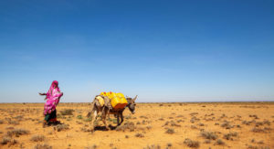 Read more about the article FROM THE FIELD: Frontline resilience in Somalia |