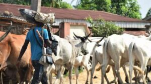 Read more about the article Yoruba Youth Group Vows To Enforce Ondo Ultimatum To Herders, Chides Presidency