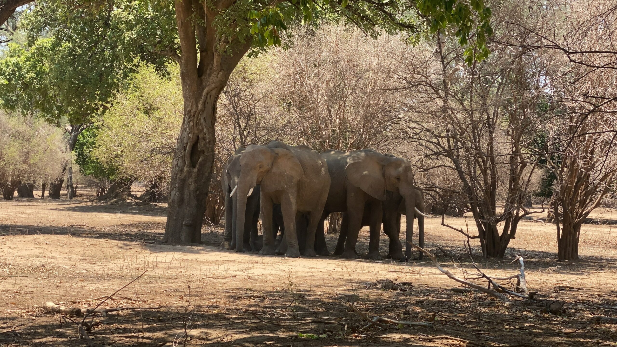 Read more about the article Zimbabwe NGO Sues Gov't Over Alleged Planned Export of Elephants to China | Voice of America