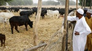 Read more about the article Nigerian Government Acting Fulani Script By Recovering 368 Grazing Reserves – Afenifere Slams Buhari